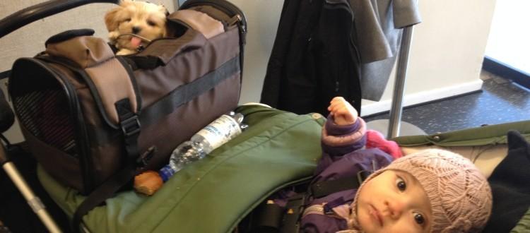 Hundevalp og barn i barnevogn til Marte Meo foredrag i uge 11 2016 i Roskilde og 9 andre byder landet rundt. Marte Meo Uddannelsen.